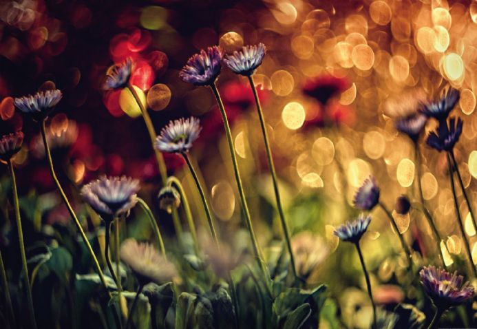 Photo wallpapers Flowers And Lights | Shop online